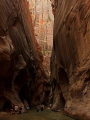Hikers wade through the Virgin River while navigating The Narrows in Zion National Park.