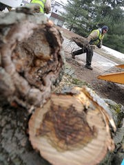 Workers from Oberlander Tree Service clear Plymouth Street after cutting down trees in preparation of a sewer project in 2015. Plymouth will be one of the areas of focus for this year's tree plantings.