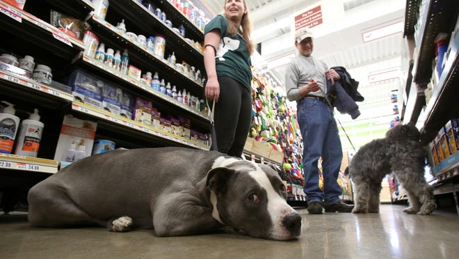 Jen Peckins, the pet handler at Pet Supplies Plus in Airmont, gets a visit from her father, Eric, and their dogs, Rocky, left, and Riley.