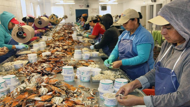 The Maryland crab industry relies heavily on so-called guest workers recruited under the H-2B visa program. Most of Maryland's seafood companies rely on H-2B guest workers to process more than 80 percent of the state's crab harvest. These workers earn piece-rate wages, which are sometimes as little as $2 a pound.