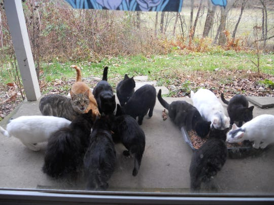 Photo courtesy of PANTA colony of feral cats dines on a meal at the back door of a generous homeowner. Spaying/neutering the cats and returning them to their environment through TNR helps control the population of roaming cats; a less costly option than supporting an unchecked colony.