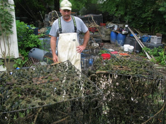 STAFFORD — Bayman Joe Rizzo looks over heavily weed-fouled crab traps he recovered last weekend near Waretown. Commercial crabbers say excessive algae and weed growth has been a problem in central Barnegat Bay this summer.