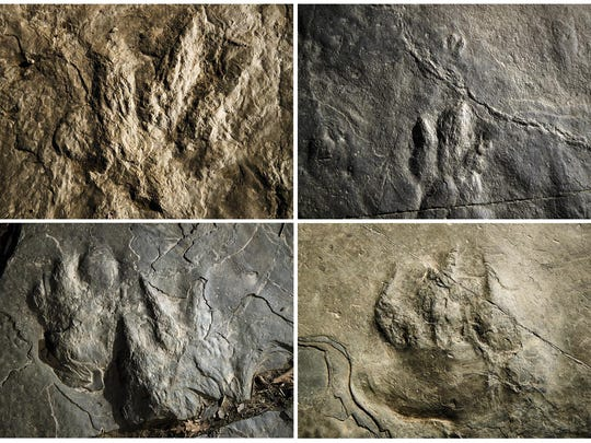 This Feb. 28, 2019, photo combination shows trace fossils on paving stones at the Valley Forge National Historical Park in Valley Forge, Pa. A volunteer at the park outside Philadelphia recently discovered dozens of fossilized footprints on flat rocks installed to pave a section of hiking trail. (AP Photo/Matt Rourke)