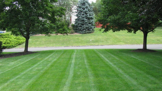 Organic lawn care expert Joe Serina said organically-treated lawns have deeper roots, less thatch and enable more nutrients and moisture to be absorbed.