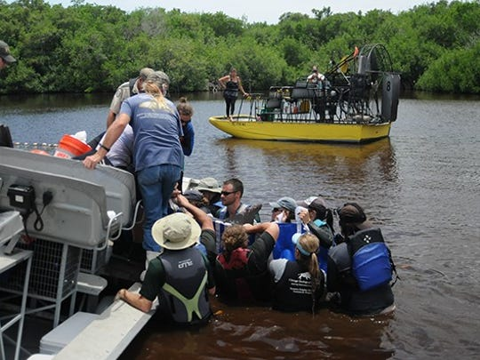 An adult male dolphin that was caught in a small lake northwest of Everglades City in Collier County was rescued by about 20 members of the Southeast Region Marine Mammal Stranding Network on Thursday.