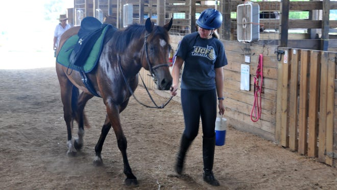 Sara McLaughlin walks Rocky, a horse rescued by Hidden Acres Rescue for Thoroughbreds in Port St. John, Fla., into the barn after a ride.
