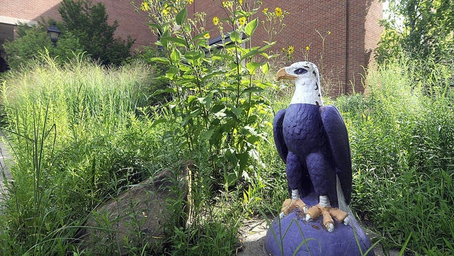 This eagle statue in front of the Kettering Science Center on the campus of Ashland University is similar to the one that was stolen from the front of Jacobs Hall in Ashland. Tom E. Puskar, Times-Gazette.com