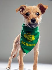 Boomer will play for Team Ruff at Animal Planet's Puppy