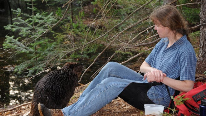 West Marlboro-based author and naturalist Patti A. Smith relaxes with Bunchberry the beaver in this photo dated April 27, 2009.