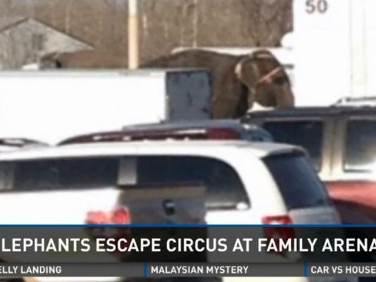 elephants escape 032314