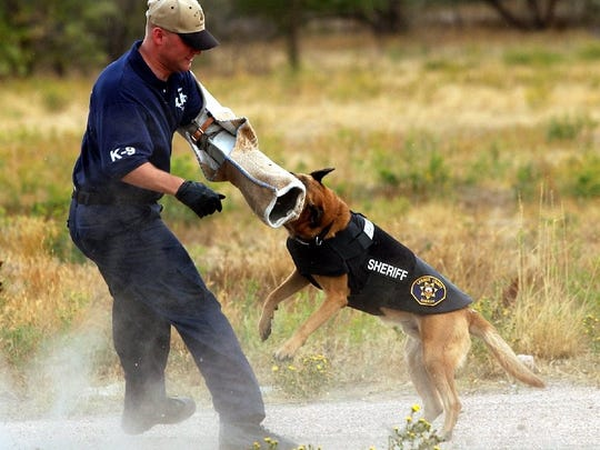 File photo: A K-9 in a bulletproof vest practices an attack.