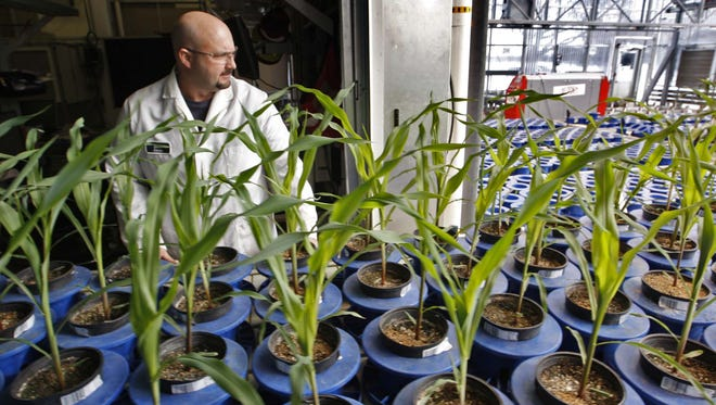 Research associate Matthew Johnson rolls a table of F.A.S.T. corn in from a greenhouse at Pioneer's Johnston research facility on Jan. 20, 2011. F.A.S.T. stands for Fast Analysis System for Traits, which allows Pioneer to grow experimental corn in 60 days.