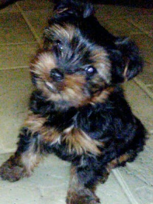 Verena's Uncle Amos, who died Jan. 31, had promised to give this puppy to her. The family picked it up this past week.