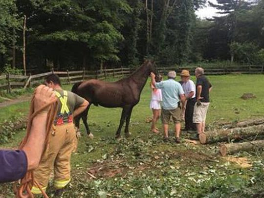 A horse, trapped by a fallen tree in Harding Township, is rescued by fire fighters and other first responders. July 24, 2018