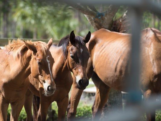 TCN 0626 HORSES 3