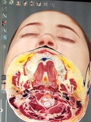 Henry Ford College students dissected the head of a