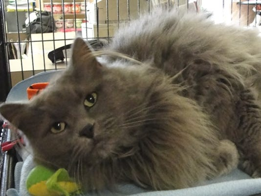 stc-0328-pet-of-the-week-lily-the-cat.jpg