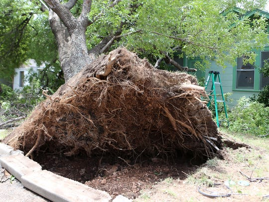Residents work to clear an unearthed tree that was knocked down by Friday night's storm leaving exposed roots and piping Saturday, June 24, 2017.