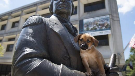 The statue of General Nathanael Greene holds a puppy during July's Newshound event with Greenville County Animal Care.