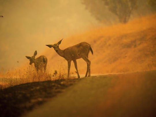 APTOPIX California Wildfires (2)