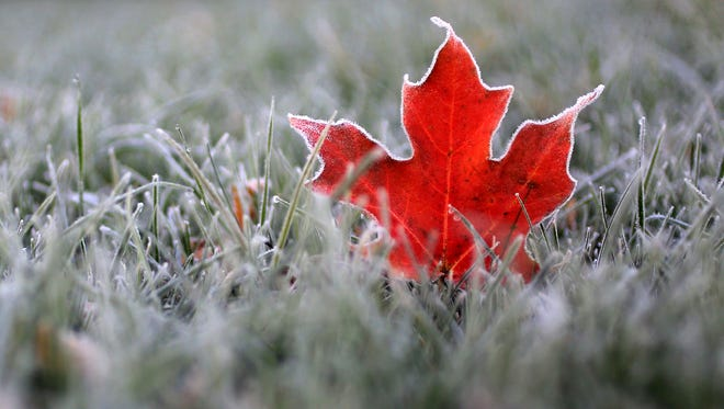 A fallen maple leaf in Oconomowoc, Wis. is laced in frost after sub-freezing overnight temperatures left a temporary ivory coat on area surroundings .