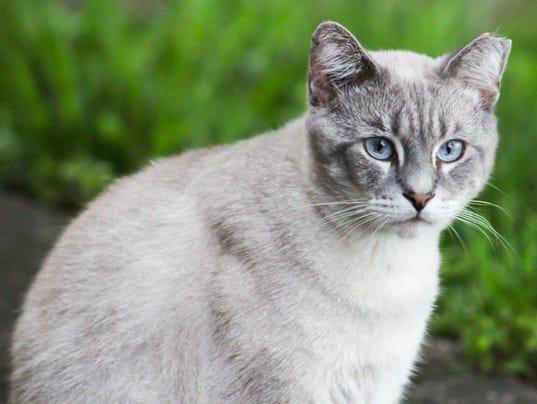 Left Ear Tipped Cat