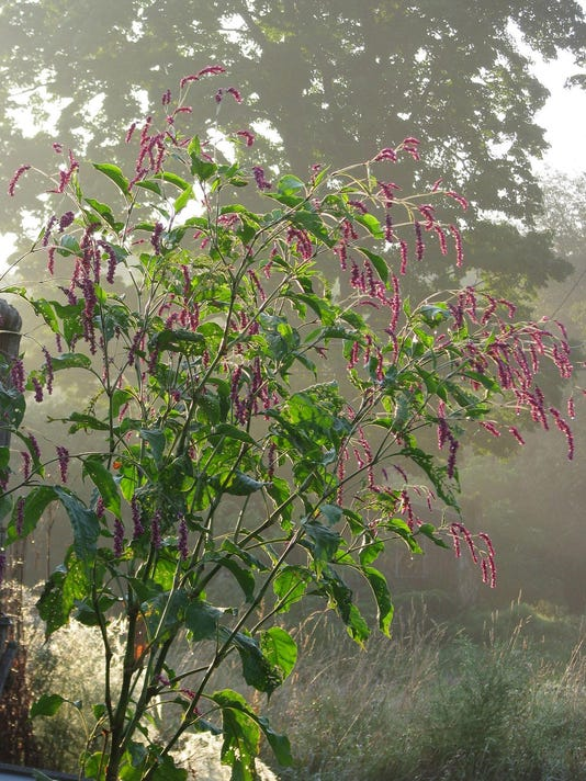 Love Themed Plants Keep Romance Blooming All Year