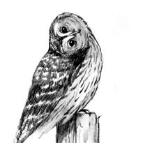 Can an owl turn its head 360 degrees?