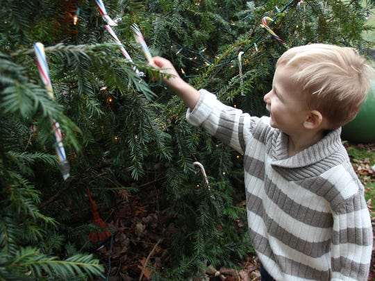 Jackson Thomas, 2, chooses a candy cane off a Christmas tree at Mister Ed's Candy Emporium and Elephant Museum's 40th annual Santa Clause Arrival Celebration on Sunday.