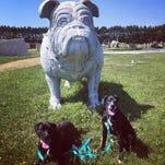 4 dog-friendly destinations in WI