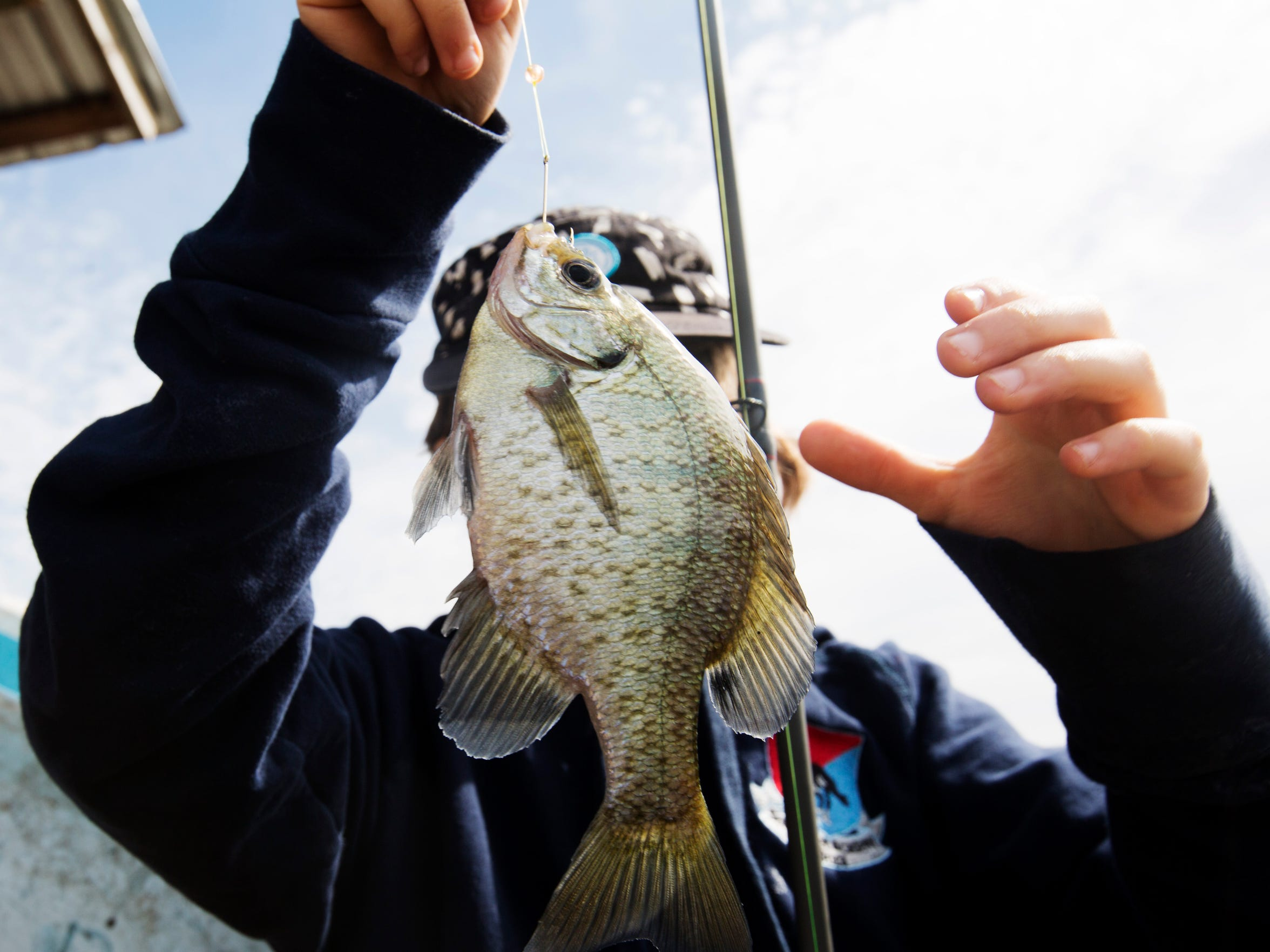 Dax Louvet, a resident of Boca Raton prepares to toss back a crappie he caught near Slim's Fish Camp in Belle Glade on Lake Okeechobee on Monday 3/21/2016.  Despite high water levels on the lake due to high amounts of rain, anglers say the  water quality and fishing has been good.
