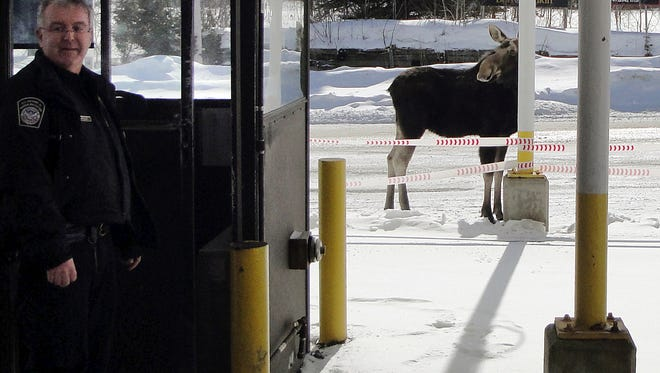 In this Dec. 1, 2016 photo provided by U.S. Customs and Border Protection, a moose stands at the border crossing station between the U.S. and Canada at Norton, Vt., manned by agent Mario Marquis, left. The agency is offering financial incentives for people willing to work at 21 remote border crossings across the country, including Norton.