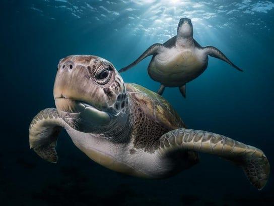 05_GregLecoeur_Turtles