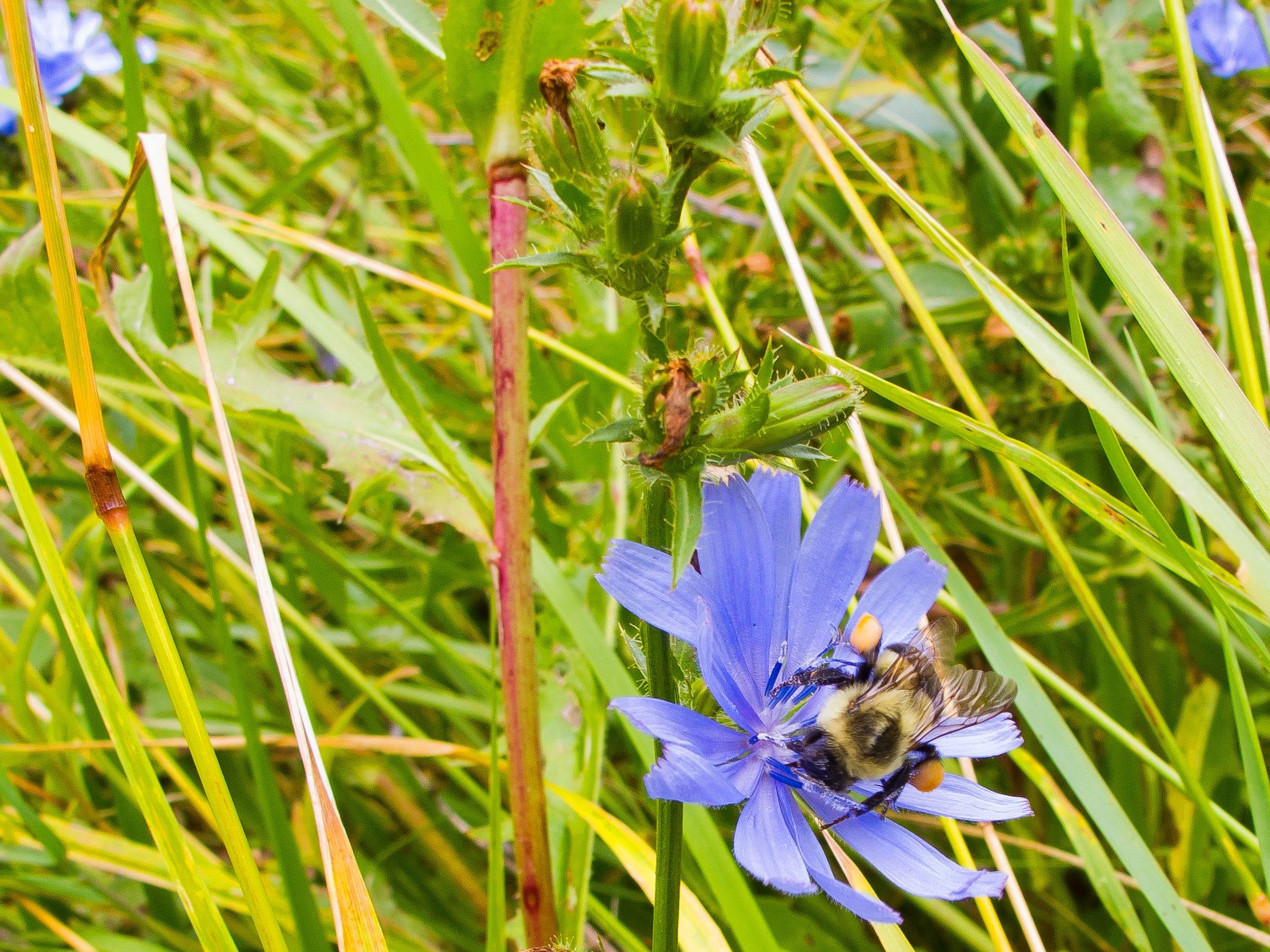BUR 0827 flower bee 3.jpg