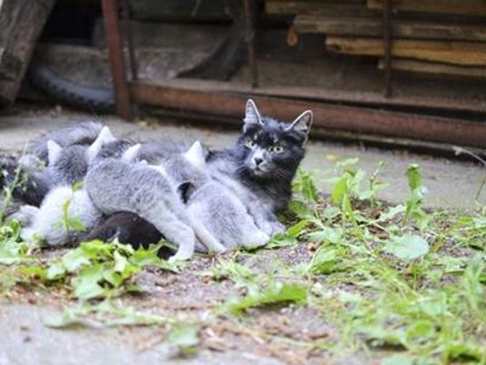 0509-ynsl-catsnip-mothercatand-kittens-002-.jpg