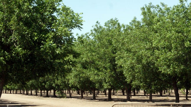 An onion farm located on NM Highway 549 east of town has agreed to settle a discrimination claim brought by U.S. workers claiming they were denied employment in favor of non-citizens working under a guest visa program.