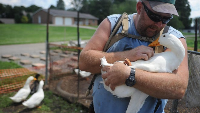 Darin Welker holds one of his ducks at his West Lafayette home. Village Council granted Welker permission to have six ducks on his property at a special meeting Tuesday.