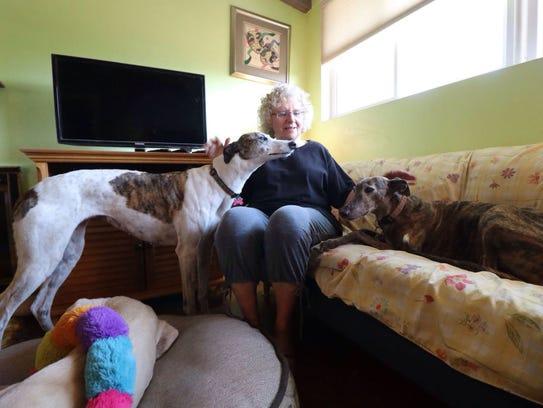 Karyn Zoldan says adopting greyhounds has changed her