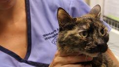 Western Arizona Humane Society receptionist Tasha Draper