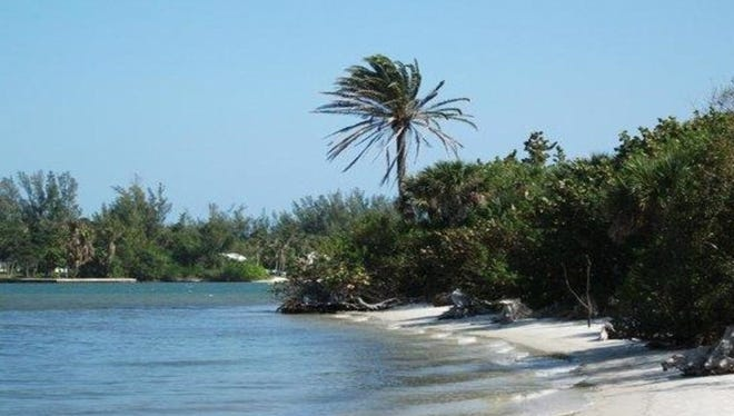 Learn about the flora and fauna that call the Indian River Lagoon, coastal hammock, and sand pine scrub their home.