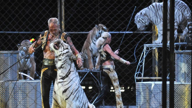 White tigers perform at Cole Bros. Circus in Vineland, Monday, May 11, 2015.