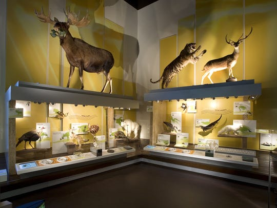 Displays at the Virginia Museum of Natural History