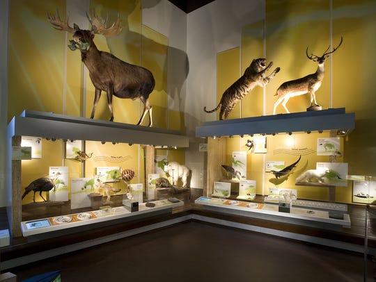 Displays at the Virginia Museum of Natural History