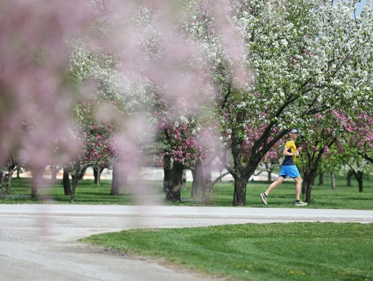 A runner passes by the blooming crab apple trees in Water Works Park on Wednesday, April 19, 2017, in Des Moines.