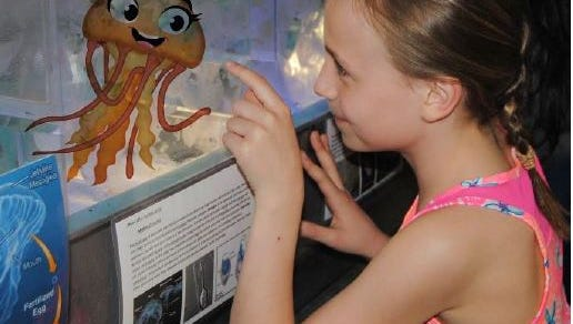 Bell the Jellyfish is helping raise funds for the new jellyfish exhibits in the Marine Cove.