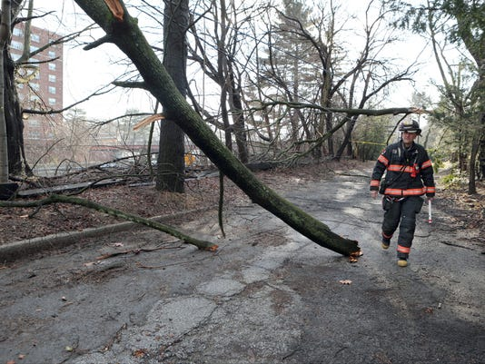 Downed trees Yonkers