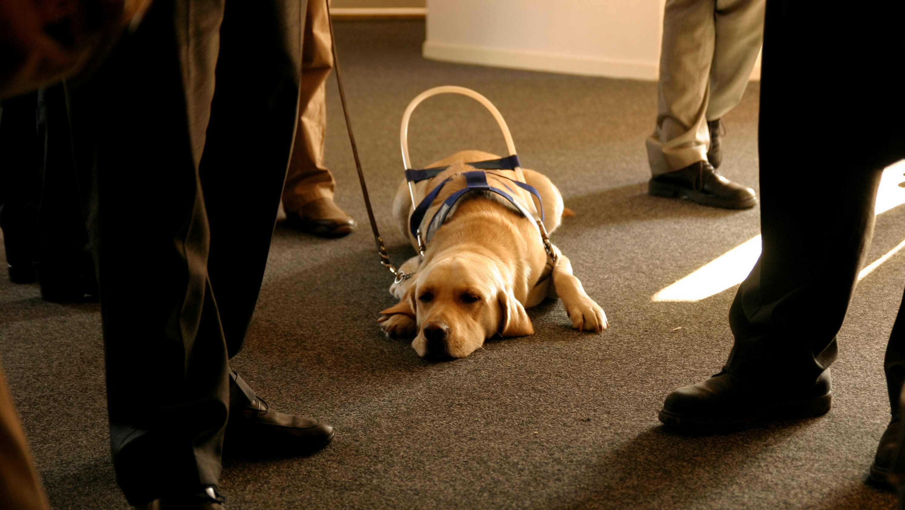 Several states crack down on dog service fraud 1betcityfo Images