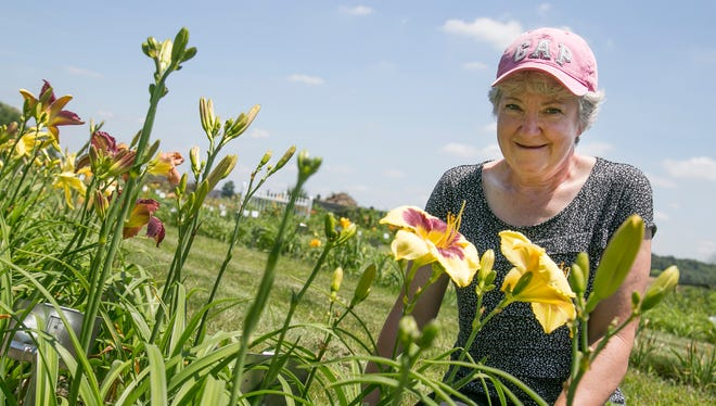 Wendy Schwall cultivates and sells daylilies at her home near the Galion Airport on Lime Road. Schwall said she grows about 500 varieties in her gardens.