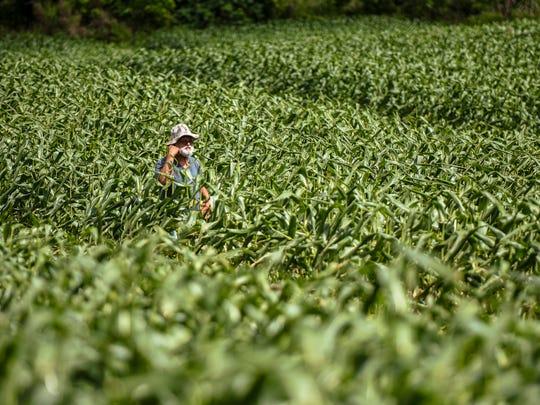 In this file photo, farmer Ernie Wusstig walks through