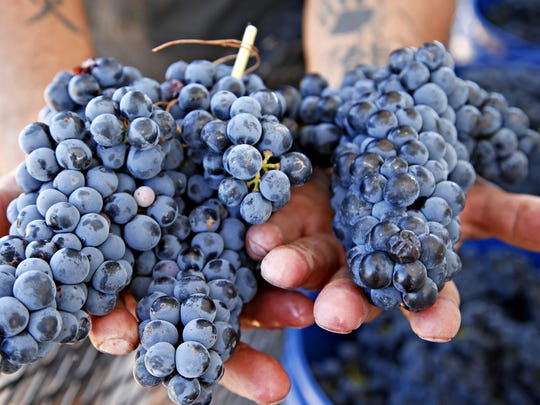 "Tempranillo grape skins handle Texas UV rays. It has a short growing season — the name means ""little early one."" Called Spain's version of cabernet sauvignon. The same can be said in Texas."